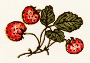 Kate Greenaway, vintage strawberry clip art, strawberries image, storybook illustration, vintage garden clipart