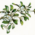 mistletoe berries clip art, vintage Christmas image, gems from holmes, botanical illustration, leaves berries clipart