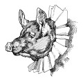 whimsical pig clip art, black and white graphics, vintage pig illustration, storybook pig clipart, pig with ruffled collar