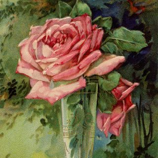 Free vintage clip art pink rose in vase birthday postcard