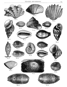 black and white clip art, sea shells printable, vintage sea clip art, digital collage sheet free