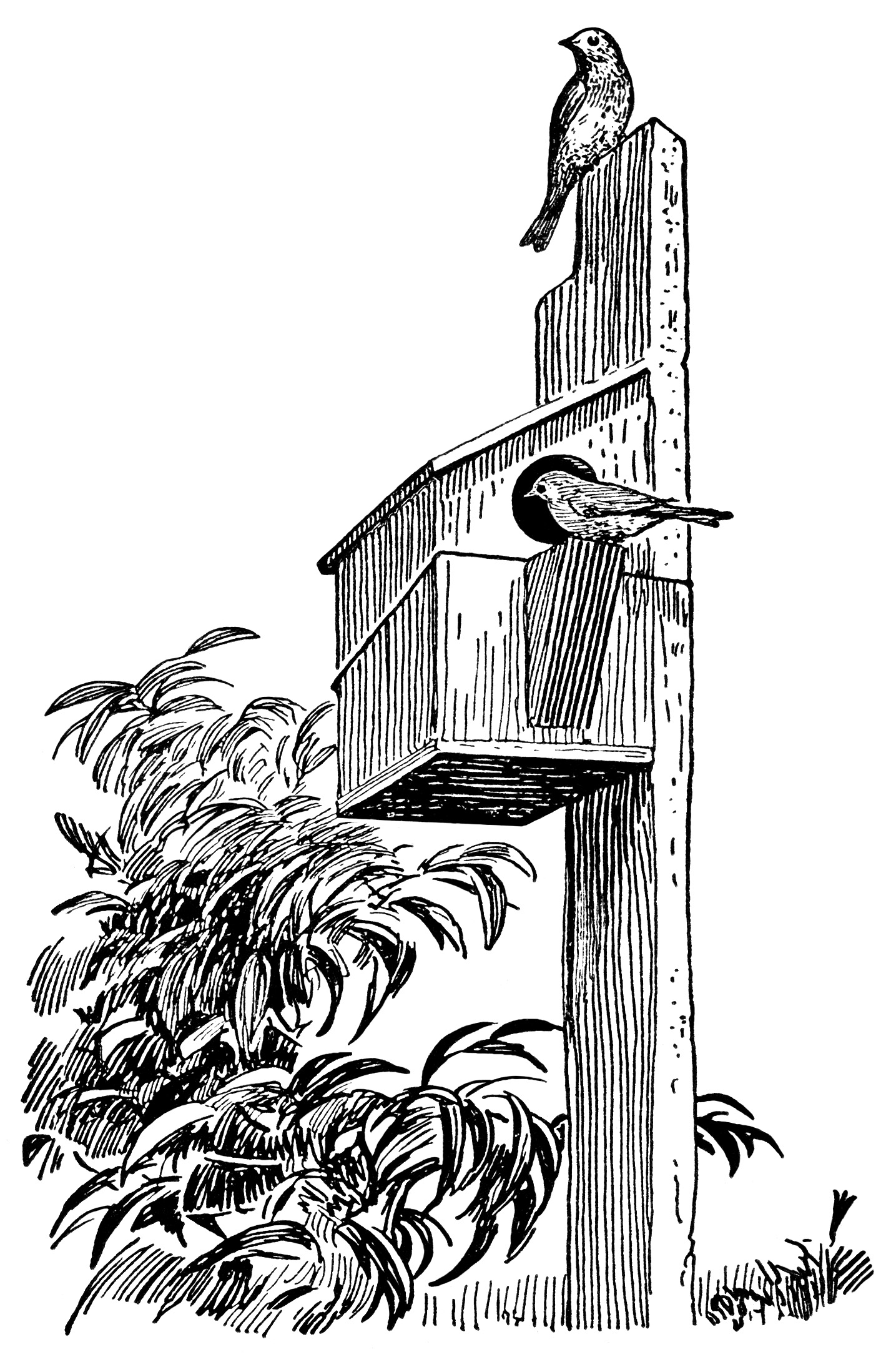 Vintage Bird Clip Art Black And White Clipart Birdhouse Illustration Free