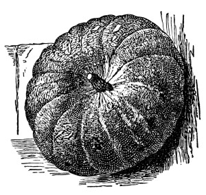 vintage pumpkin clip art, Halloween clipart, black and white graphics, pumpkin illustration, free vintage ephemera