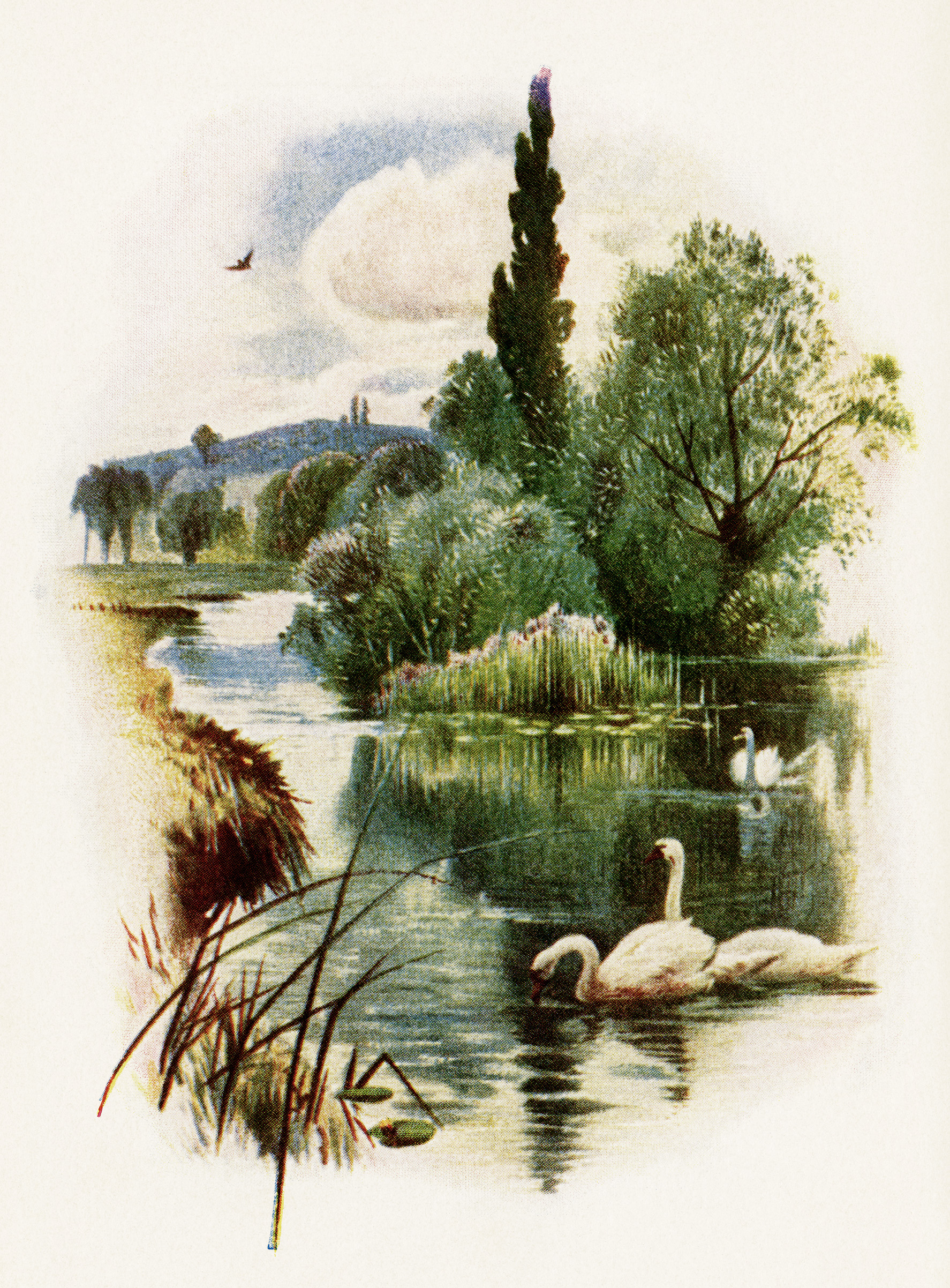 swans swimming illustration, free vintage clip art, swan on pond, nature outdoors scene, vintage swan image