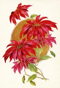 Christmas flower illustration, poinsettia clip art, vintage floral clipart, red flower graphics, printable Christmas image