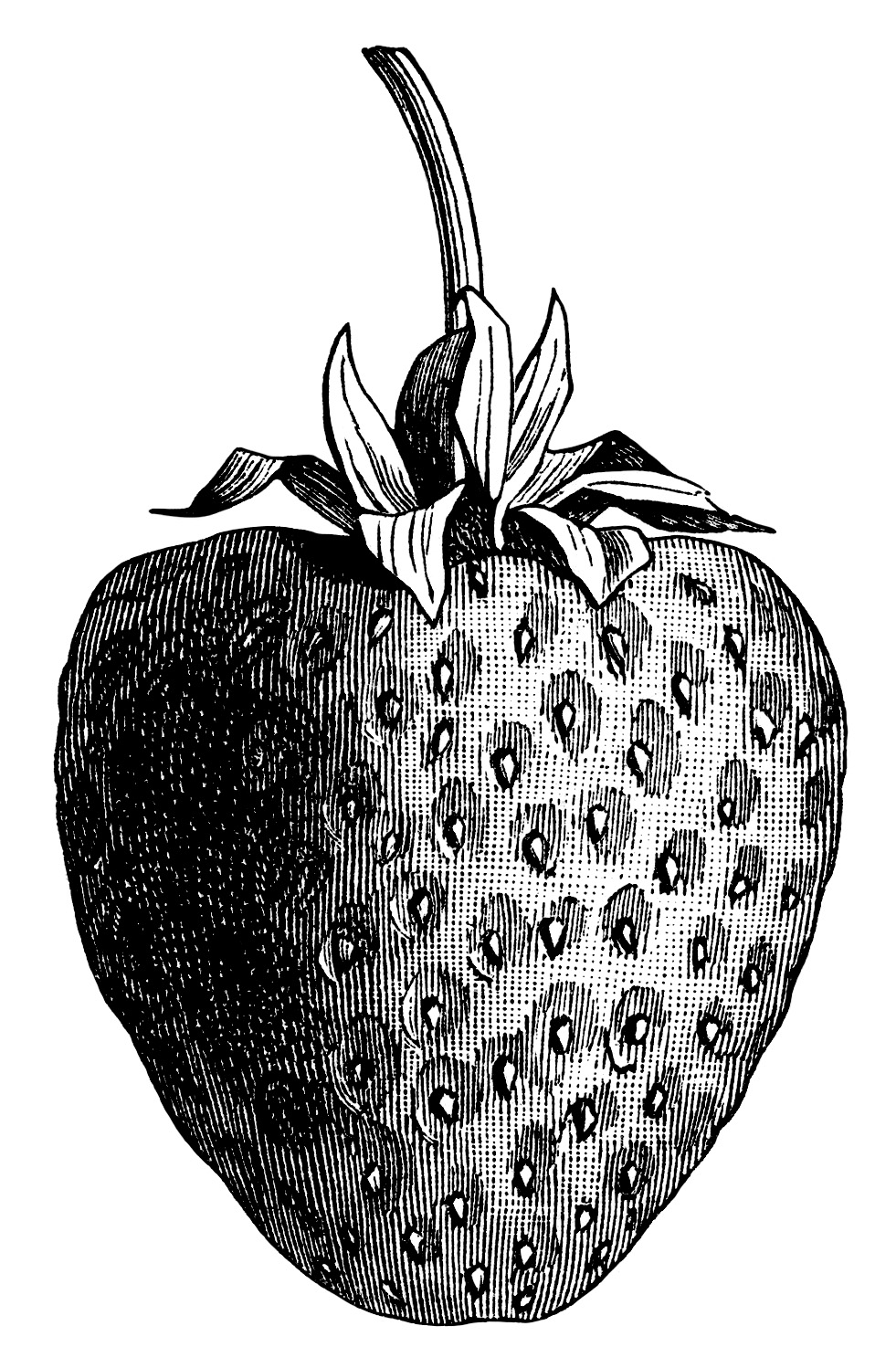vintage strawberry clip art, black and white graphics, strawberry illustration, printable fruit image, berry digital stamp