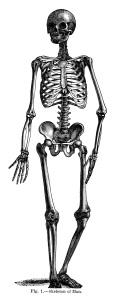 vintage halloween clip art, skeleton clip art, black and white illustration, graphic design, skeleton of man