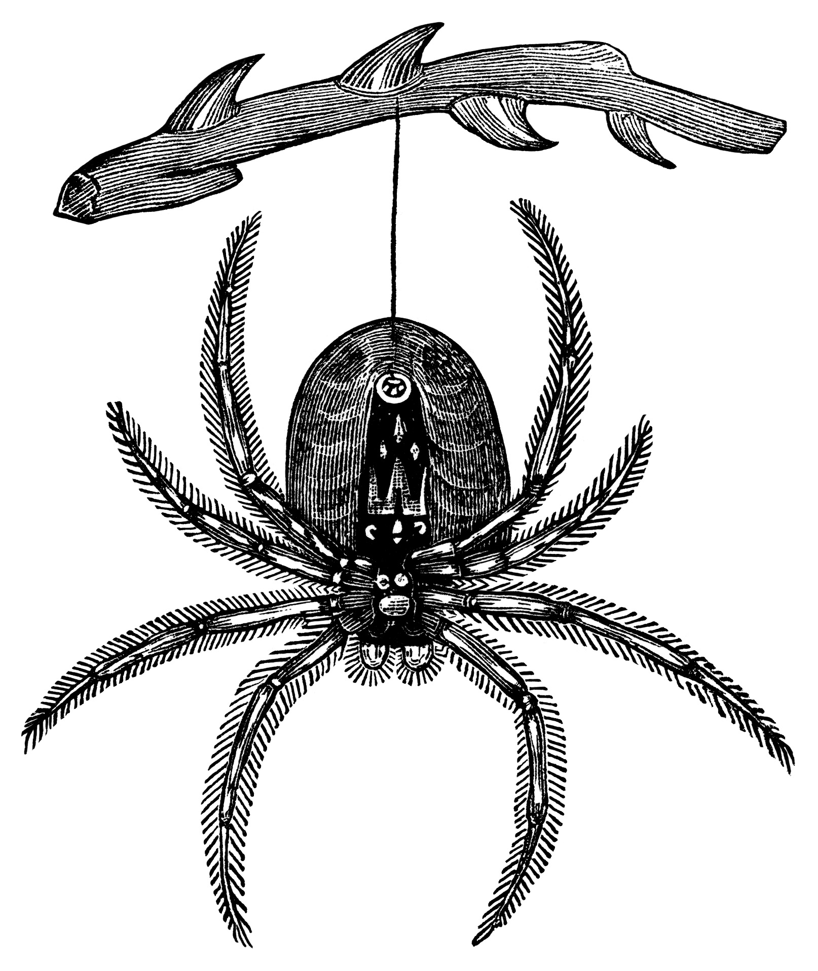 Hanging Spider ~ Free Vintage Clip Art - Old Design Shop Blog