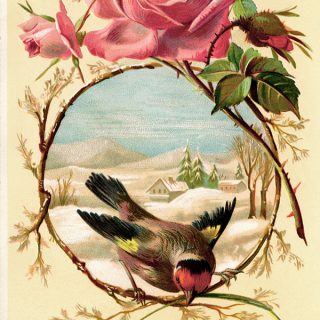 Free vintage clip art image pink rose bird winter scene background