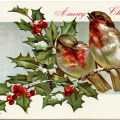 vintage postcard graphic, winter bird illustration, birds holly berries, old fashioned Christmas postcard, antique Christmas card
