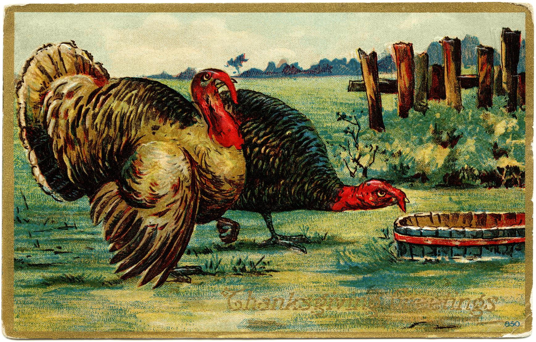 vintage Thanksgiving postcard, vintage Thanksgiving turkey, old fashioned thanksgiving card, turkey clip art, tom hen illustration