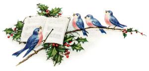 blue pink birds illustration, vintage new year postcard, singing birds clip art, holly berries bird illustration, music conductor bird graphics