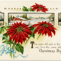 Stecher Christmas postcard, public domain Christmas image, vintage poinsettia clip art, winter flower graphics, printable Christmas illustration