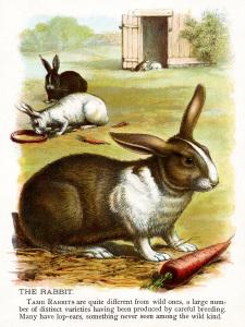 vintage rabbit clip art, rabbit illustration, vintage animal printable, easter bunny rabbit picture, antique hare color image