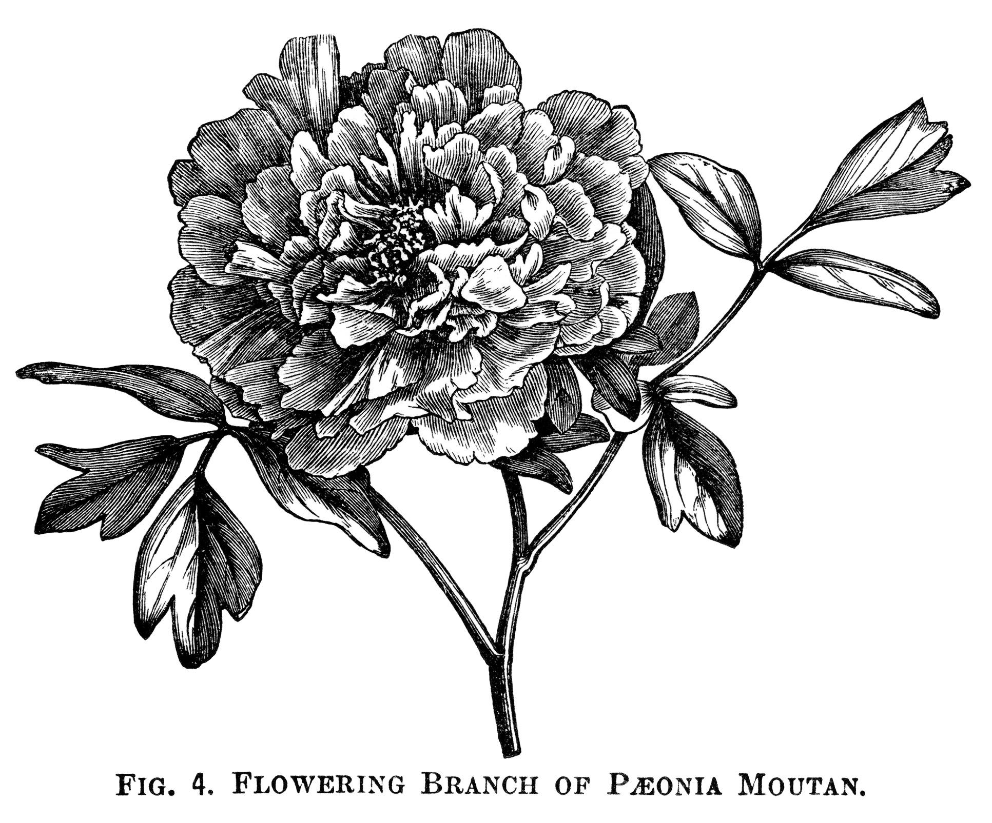 Girl Selling Flower Stock Illustrations – 77 Girl Selling Flower Stock  Illustrations, Vectors & Clipart - Dreamstime