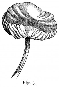 black and white clipart, mushroom graphics, vintage botanical printable, common mushroom, st george mushroom, champignon image, hedgehog mushroom clipart, edible boletus illus, spring morel, parasol mushroom