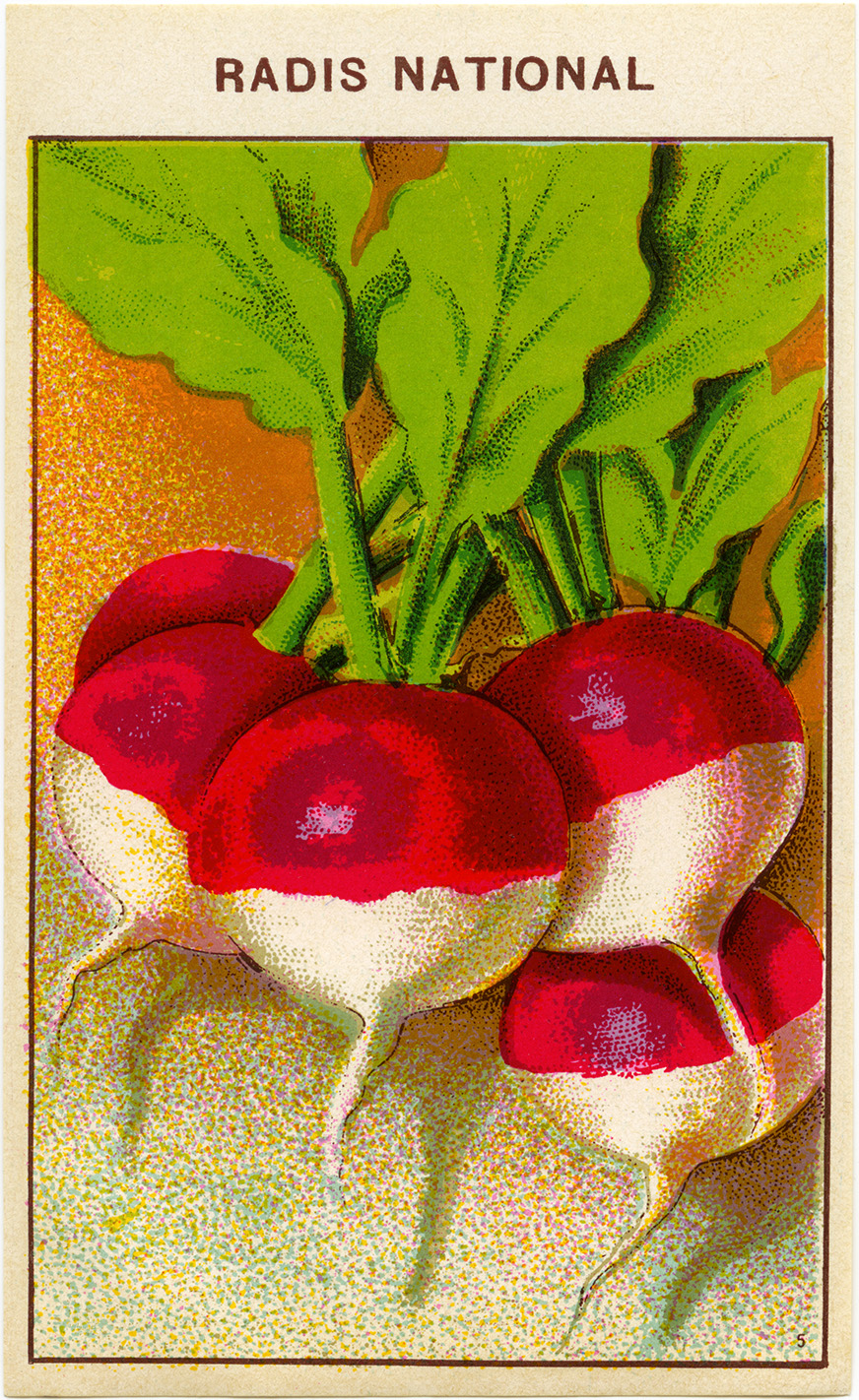 Radish French Seed Packet Label