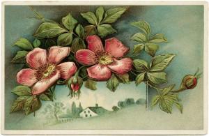 free vintage clip art floral postcard