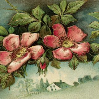 free vintage clip art floral birthday postcard