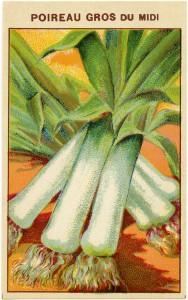 French seed label, leek seed label, vintage garden clip art, old fashioned seed package, vintage leek illustration, poireau gros du midi