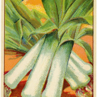 Leeks French Seed Label