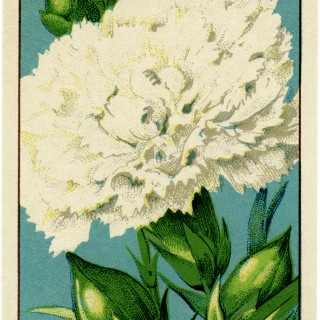 French Seed Label Carnation