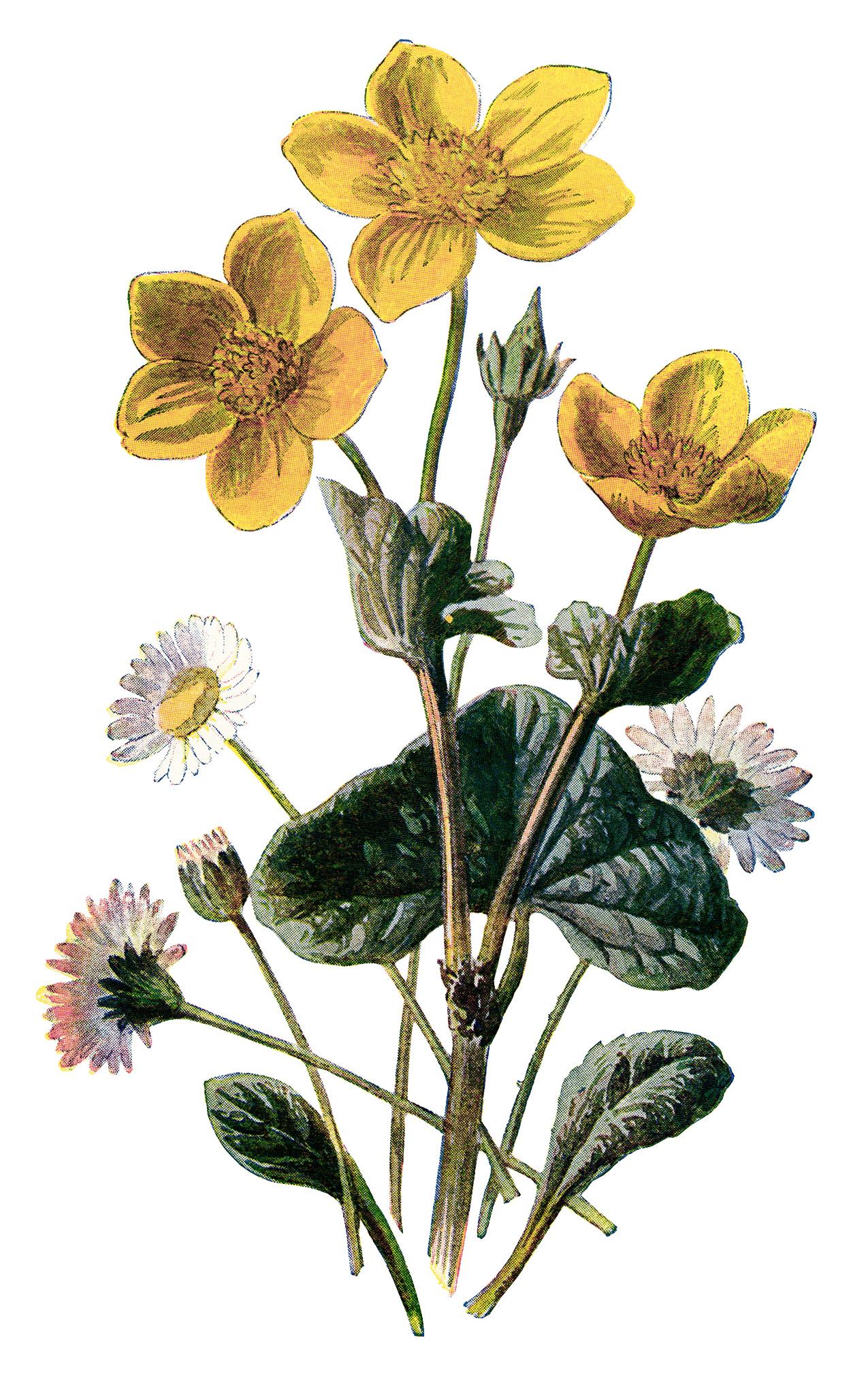 Vintage Flower Drawings 68