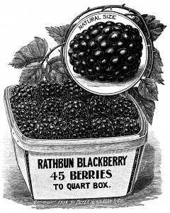 vintage garden illustration, strawberry plant printable, vintage blackberry clip art, Peter Henderson's catalog page, old book pages
