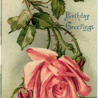 Pink Rose Vintage Birthday Postcard