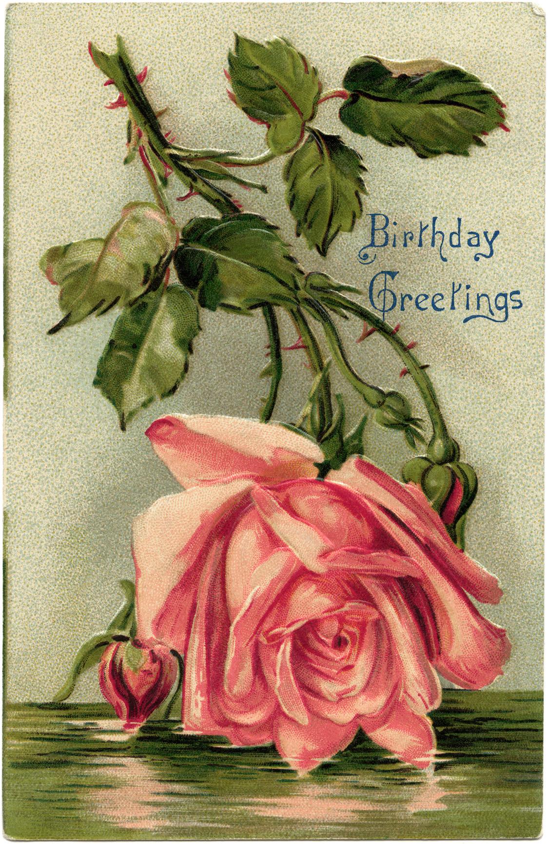 Pink Rose Vintage Birthday Postcard Old Design Shop Blog