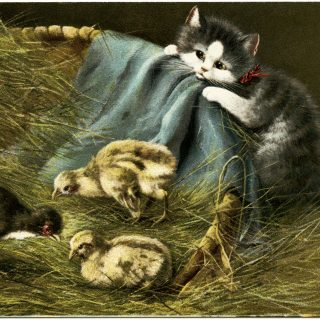 kitten and chicks, vintage postcard, vintage kitten postcard, baby chick graphics, farm animals clip art, cat in barn illustration