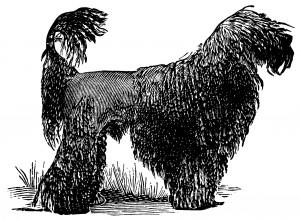 French black poodle, black and white clip art, dog clip art, poodle illustration, vintage animal printable
