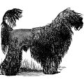 black poodle dog clip art