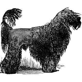 black poodle dog clip art