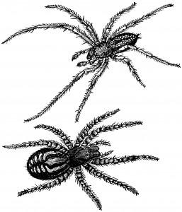 Spiders ~ Free Vintage Clip Art - Old Design Shop Blog