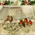vintage Christmas postcard, birds and holly, country winter scene, old fashioned Christmas card, birds on branch clip art