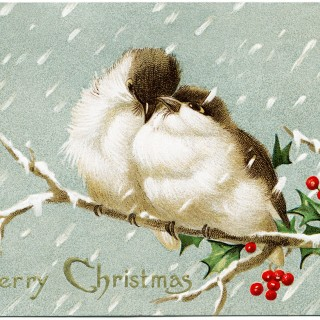 vintage Christmas postcard, love birds graphic, bird holly berries illus, old fashioned Christmas card, birds on branch clip art