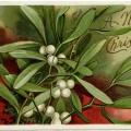 antique Christmas postcard, Ellen Clapsaddle, mistletoe and berries, Victorian Clapsaddle card, vintage Christmas clip art