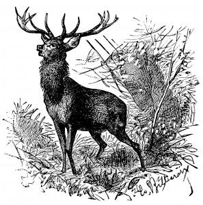 free vintage printable black and white deer illustration
