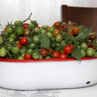 cherry tomato, fall harvest