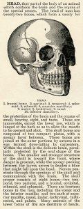 skull clip art, human head skull, vintage printable, black and white graphics, halloween clip art