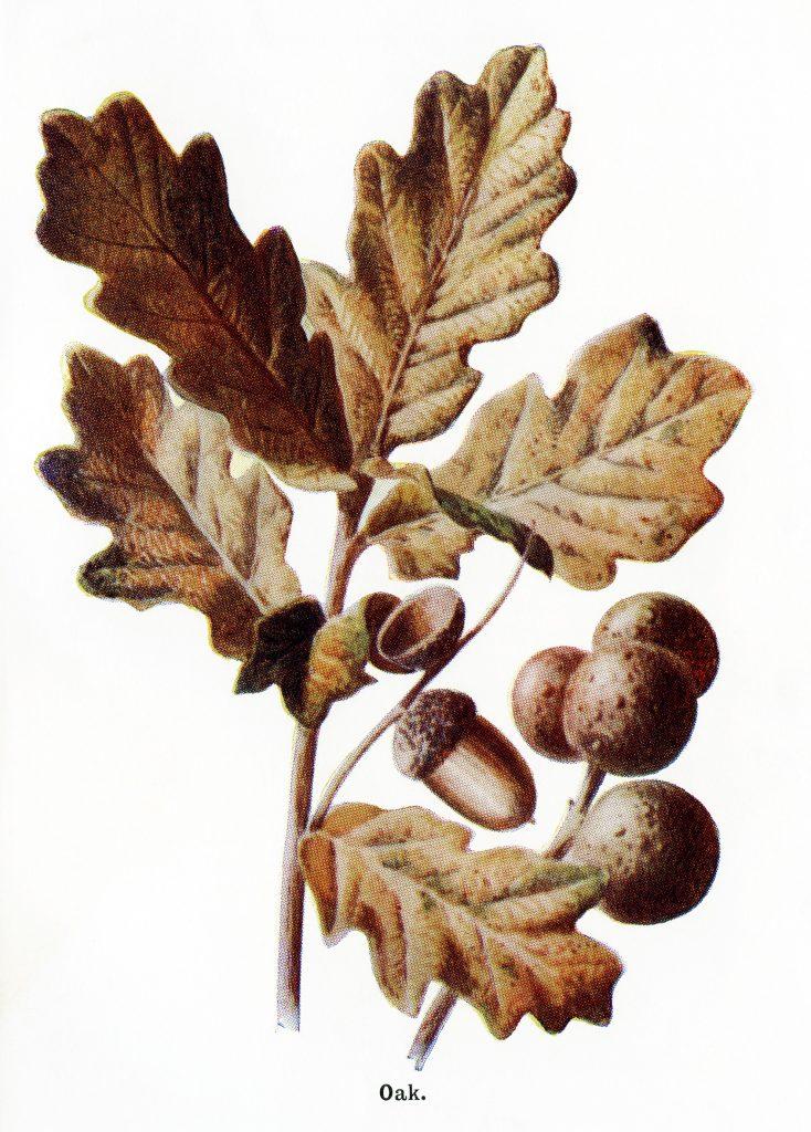 fall colored oak leaves and acorns old design shop blog