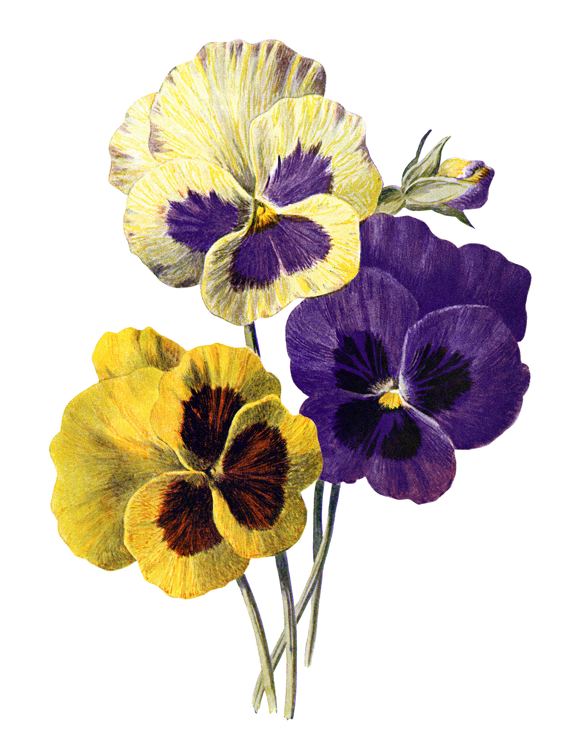 pansies clip art old design shop blog pansy flower clip art Black and White Pansy Clip Art