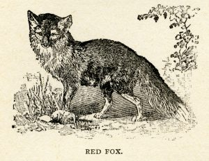 fox clip art, red fox, vintage printable, black and white graphics, animal clipart