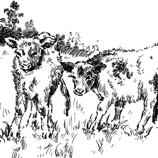 Free Vintage Clip Art Calves at the Farm