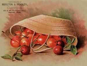 Free Printable Vintage Advertising Card Moulton and Bradley Cherries in Basket