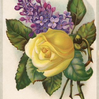 Tulip Soap Floral Advertising Card