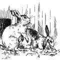 free vintage clip art printable bunny rabbits