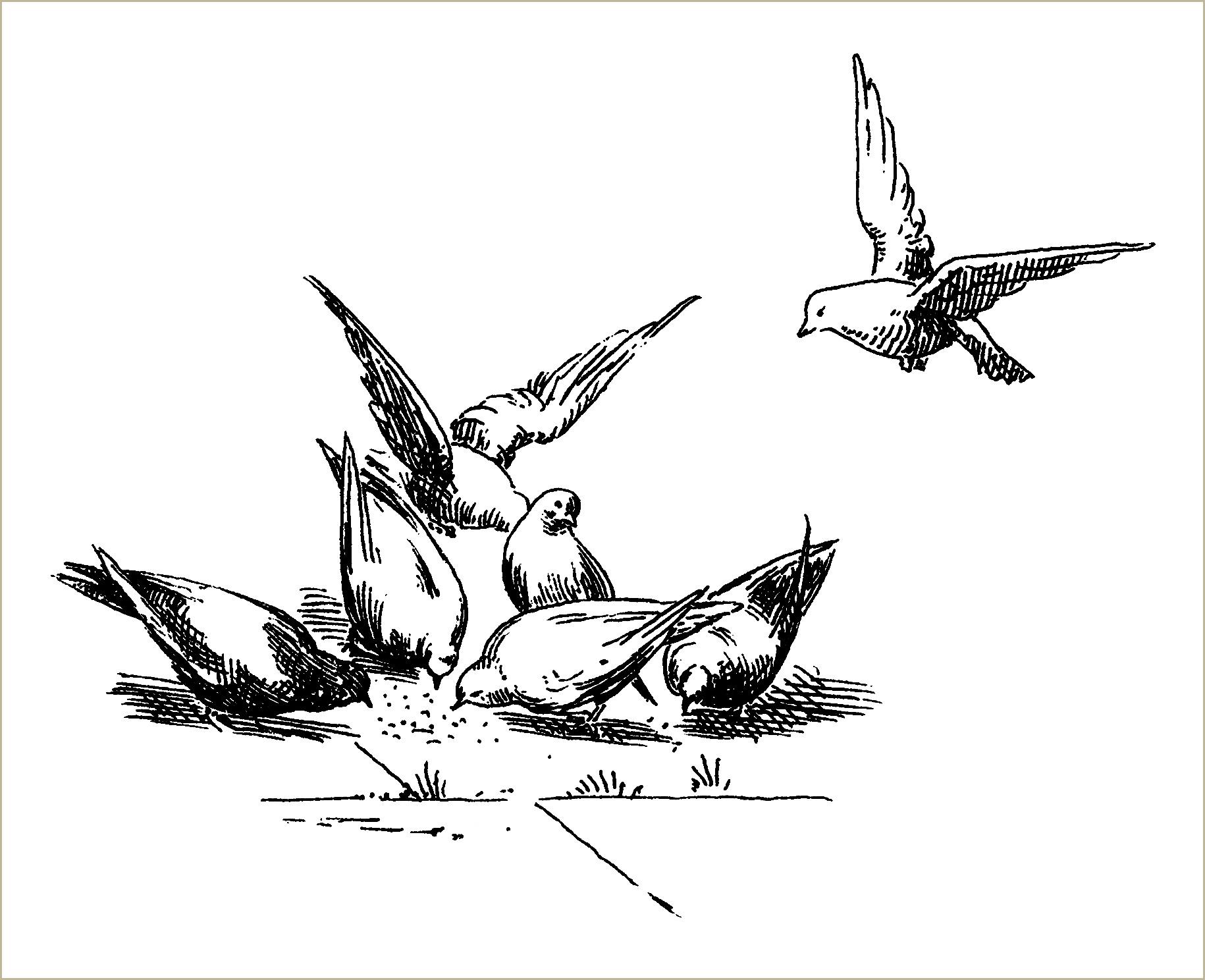 Free Vintage Clip Art Pigeons - Old Design Shop Blog
