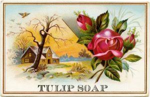 free victorian clip art tulip soap with roses trade card vintage ephemera